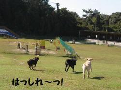 Ofukai_002