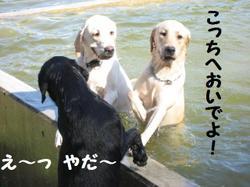 Ofukai_003