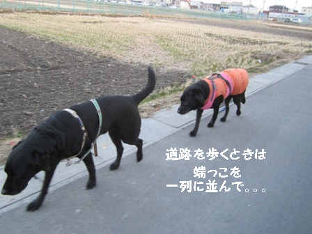 Img_5230_2